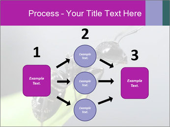 Ant PowerPoint Template - Slide 92