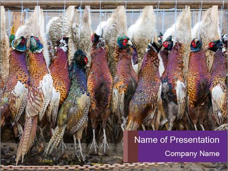 Pheasants PowerPoint Templates