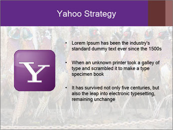 Pheasants PowerPoint Templates - Slide 11