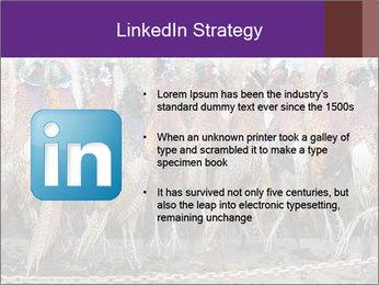 Pheasants PowerPoint Templates - Slide 12