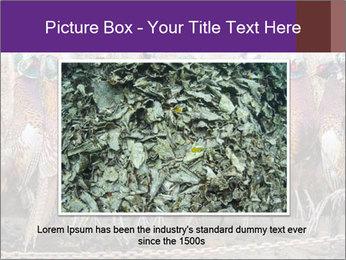 Pheasants PowerPoint Templates - Slide 15