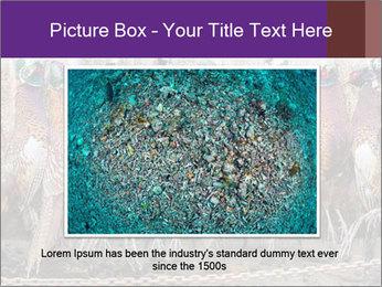Pheasants PowerPoint Templates - Slide 16