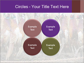 Pheasants PowerPoint Templates - Slide 38