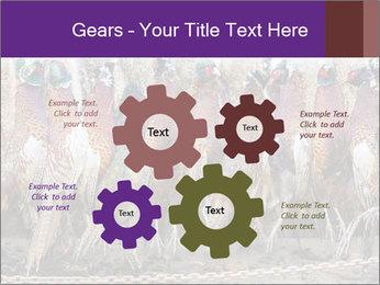 Pheasants PowerPoint Templates - Slide 47