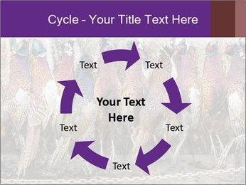 Pheasants PowerPoint Templates - Slide 62