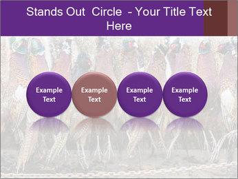 Pheasants PowerPoint Templates - Slide 76