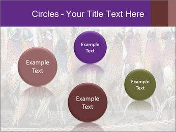 Pheasants PowerPoint Templates - Slide 77