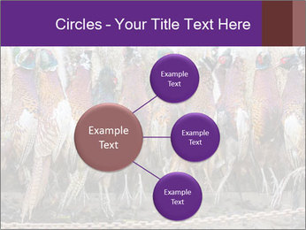 Pheasants PowerPoint Templates - Slide 79