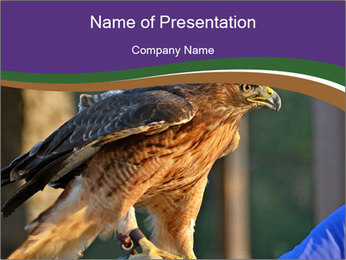 The red-tailed hawk PowerPoint Template
