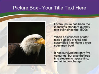 The red-tailed hawk PowerPoint Templates - Slide 13