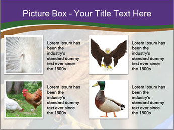The red-tailed hawk PowerPoint Templates - Slide 14