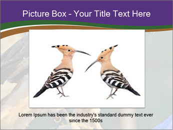 The red-tailed hawk PowerPoint Templates - Slide 15