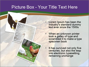 The red-tailed hawk PowerPoint Templates - Slide 17