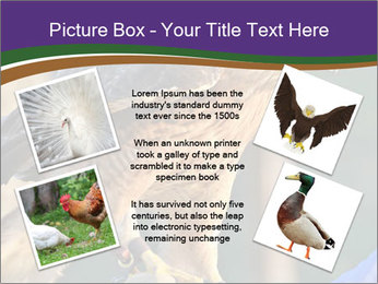 The red-tailed hawk PowerPoint Templates - Slide 24