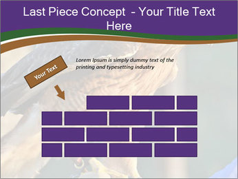 The red-tailed hawk PowerPoint Templates - Slide 46