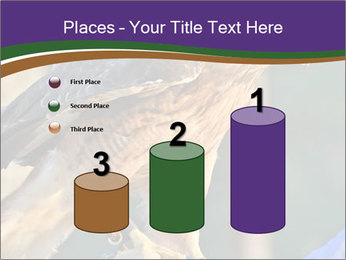 The red-tailed hawk PowerPoint Templates - Slide 65