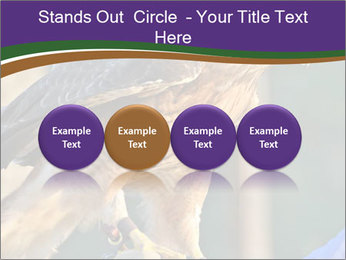 The red-tailed hawk PowerPoint Templates - Slide 76