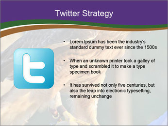 The red-tailed hawk PowerPoint Templates - Slide 9
