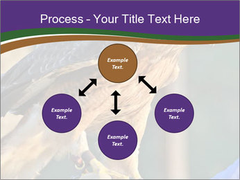 The red-tailed hawk PowerPoint Templates - Slide 91