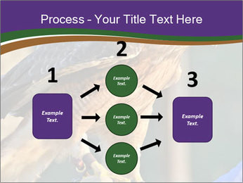 The red-tailed hawk PowerPoint Templates - Slide 92