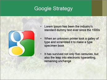 Black bear PowerPoint Templates - Slide 10