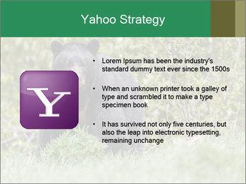 Black bear PowerPoint Templates - Slide 11
