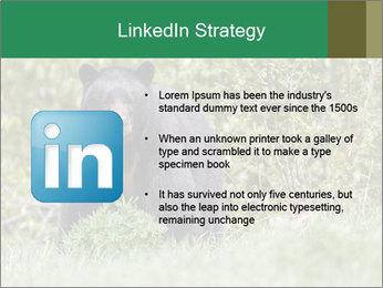 Black bear PowerPoint Templates - Slide 12