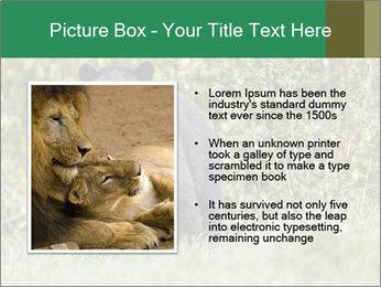 Black bear PowerPoint Templates - Slide 13