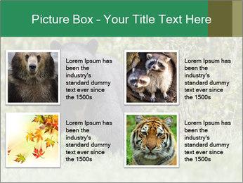 Black bear PowerPoint Templates - Slide 14