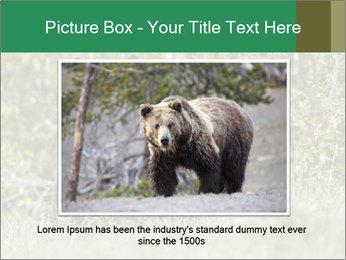 Black bear PowerPoint Templates - Slide 15