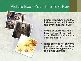 Black bear PowerPoint Templates - Slide 17
