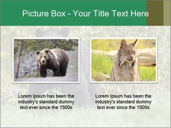 Black bear PowerPoint Templates - Slide 18