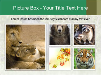 Black bear PowerPoint Templates - Slide 19