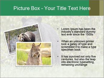 Black bear PowerPoint Templates - Slide 20