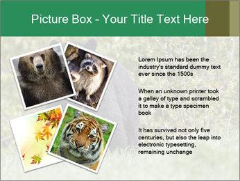 Black bear PowerPoint Templates - Slide 23