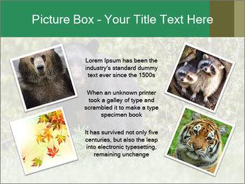 Black bear PowerPoint Templates - Slide 24