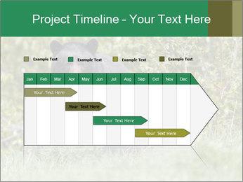 Black bear PowerPoint Templates - Slide 25