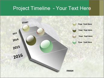 Black bear PowerPoint Templates - Slide 26
