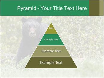 Black bear PowerPoint Templates - Slide 30