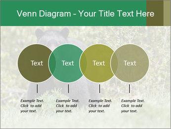 Black bear PowerPoint Templates - Slide 32