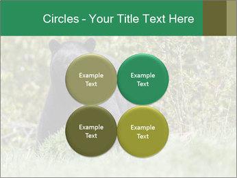 Black bear PowerPoint Templates - Slide 38