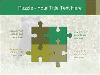 Black bear PowerPoint Templates - Slide 43