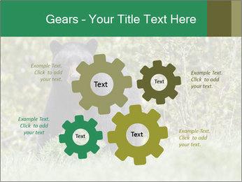 Black bear PowerPoint Templates - Slide 47