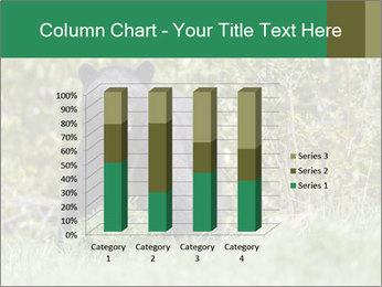 Black bear PowerPoint Templates - Slide 50
