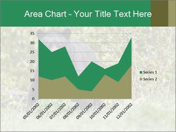 Black bear PowerPoint Templates - Slide 53