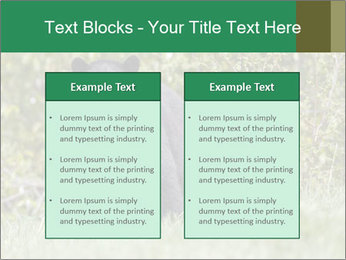Black bear PowerPoint Templates - Slide 57