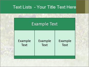 Black bear PowerPoint Templates - Slide 59
