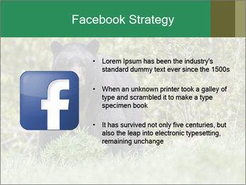 Black bear PowerPoint Templates - Slide 6