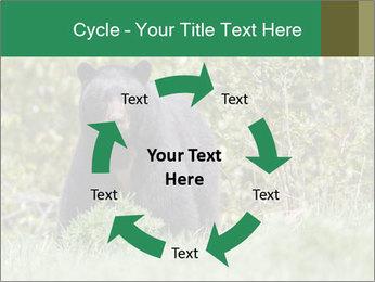 Black bear PowerPoint Templates - Slide 62