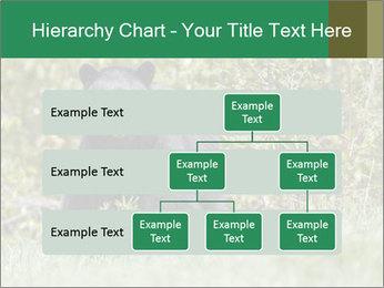 Black bear PowerPoint Templates - Slide 67